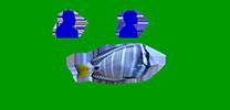 FISH of Lexington